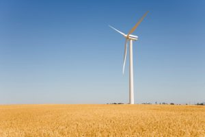 Wind turbine in wheat field