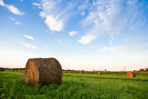 The Economics Of Small Squares Vs Round Hay Bales - Bales